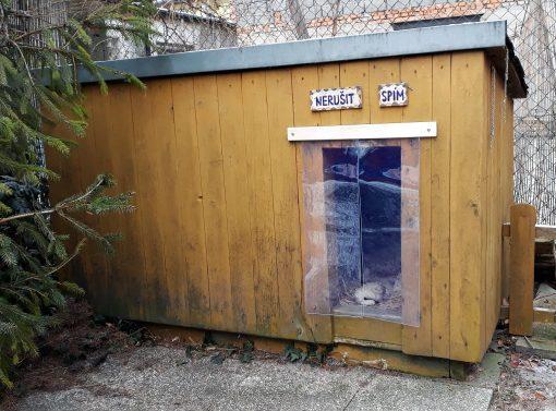 clona pro psí boudu